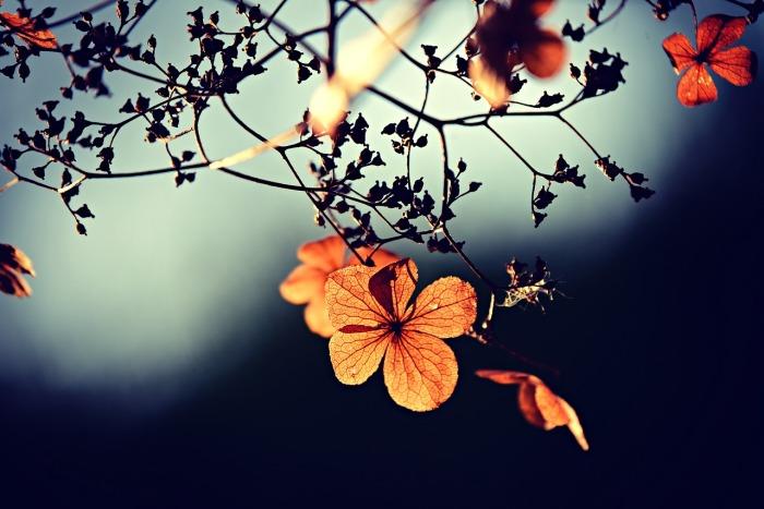 flower-3876195_1280
