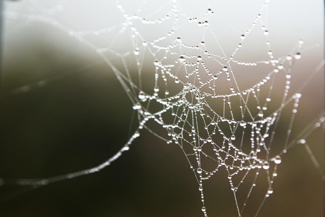 web_0781